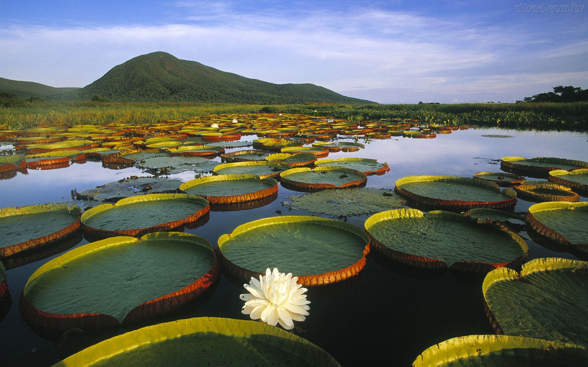 biodiversidade -amazonia