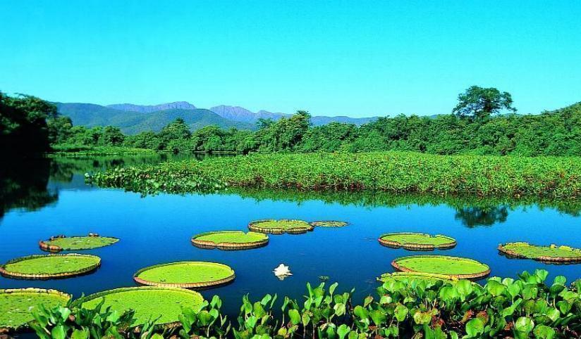 Tudo sobre o Bioma Pantanal
